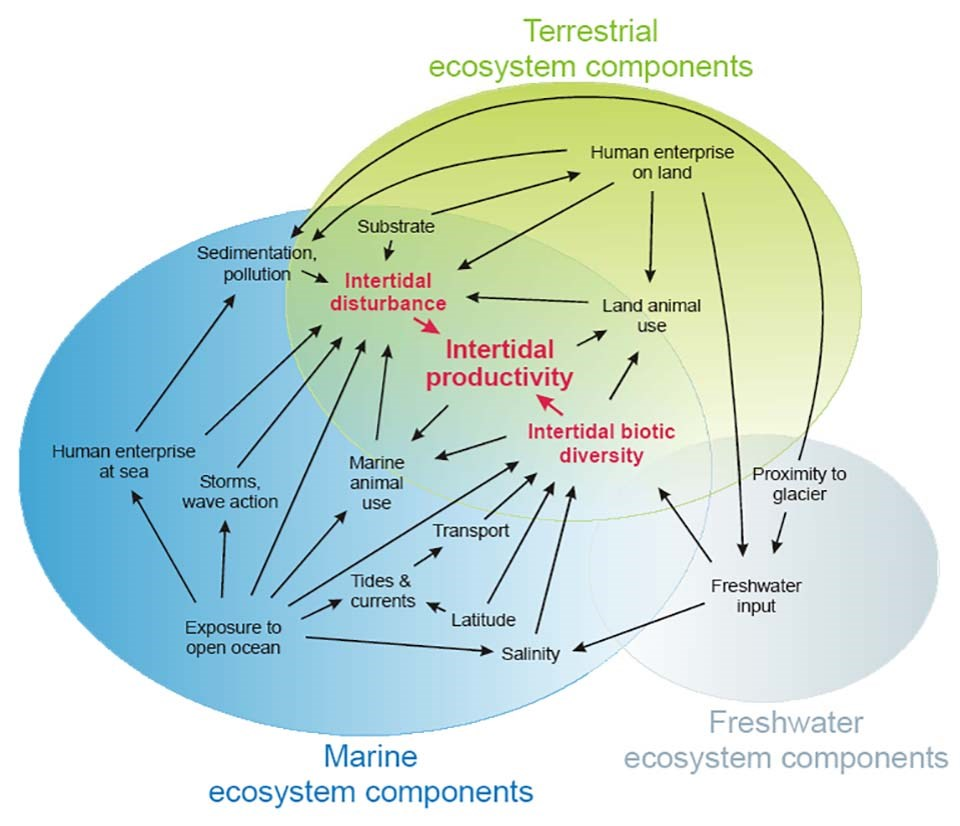 A conceptual model showing the interaction between ecosystems.