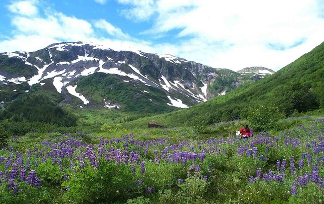 A researcher makes notes in the field surrounded by wildflowers and mountains