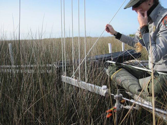 A coastal ecologist measures saltmarsh elevation using a Rod-Surface Elevation Table technique at Cape Hatteras National Seashore.