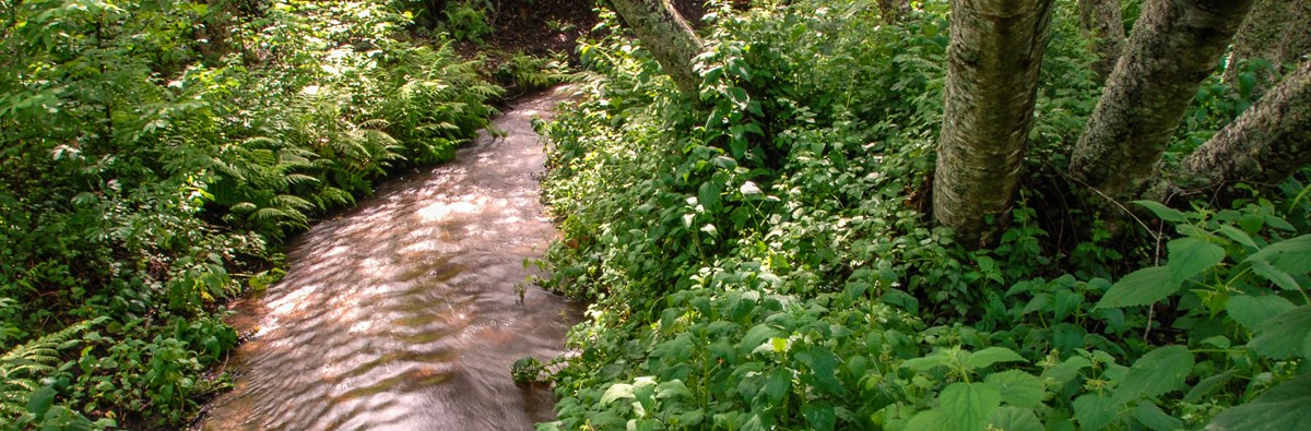 A stream winding through lush green vegetation