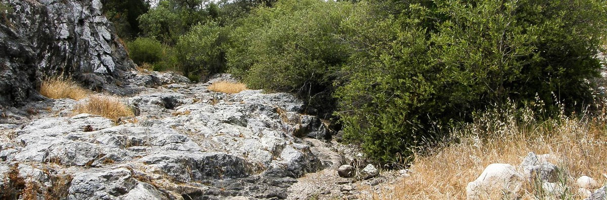 A dry creekbed with green vegetation along the banks