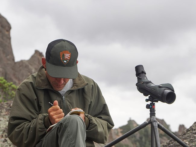 Pinnacles wildlife biologist takes measurements.