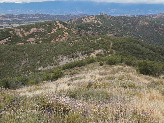 Grassland and chaparral vegetation at Pinnacles national park.