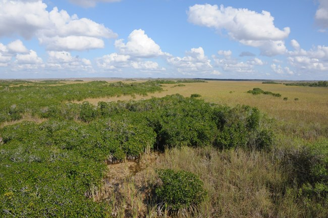 Mangrove-marsh ecotone viewed from above at Everglades National Park.