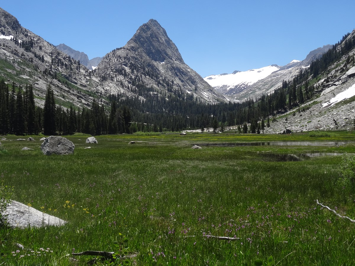 Lush green meadow with views of granite peak, Kings Canyon National Park