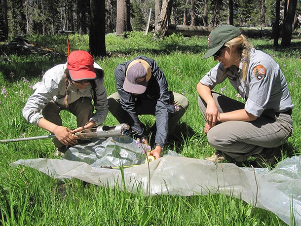 Three National Park Service scientists kneel near a wetlands soil profile to classify wetland type, Sequoia National Park.