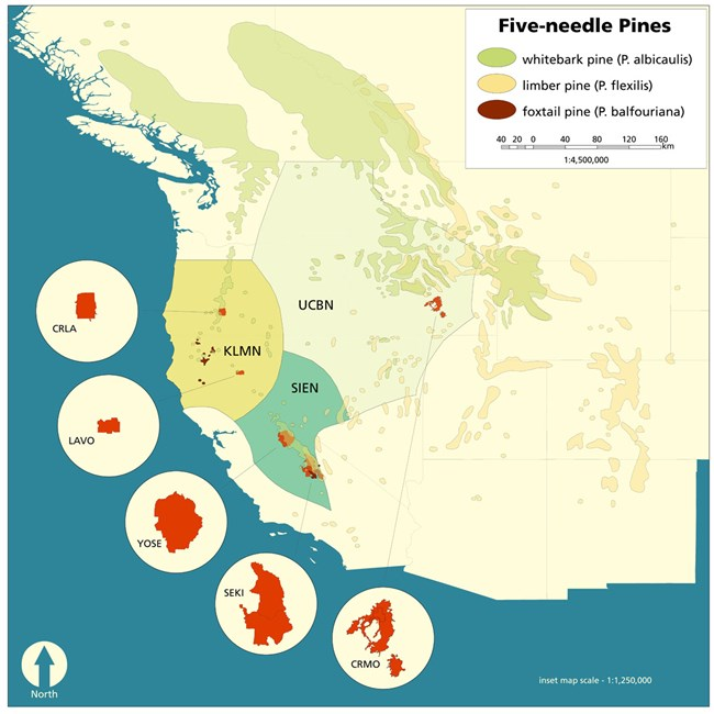 Map of Five-needle pines in western North America
