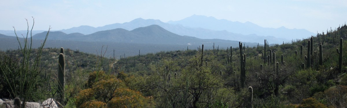 Distant mountain view, Saguaro National Park