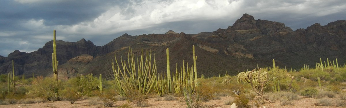 Clouds over Organ Pipe Cactus National Monument