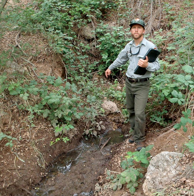 Man in NPS uniform points down at small flow of water in riparian area.