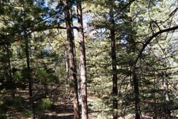 Temperate forest, Chiricahua National Monument