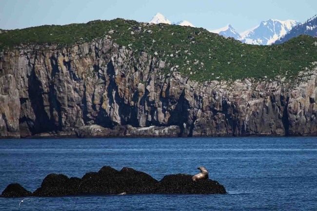 Steep, rocky cliffs along the coast of Kenai Fjords.