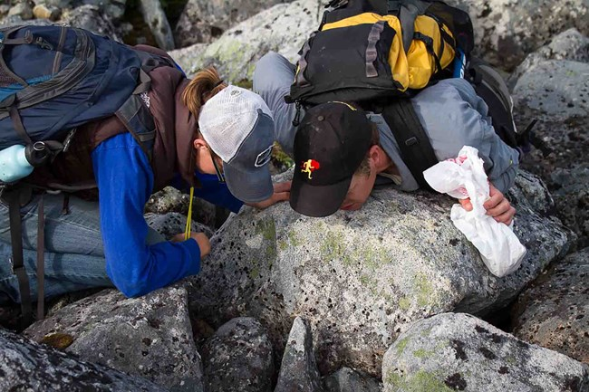 Two researchers peer into rocks looking at lichen.