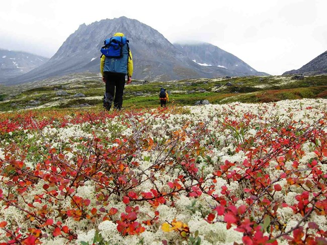 Hikers walk through the colorful tundra in fall.