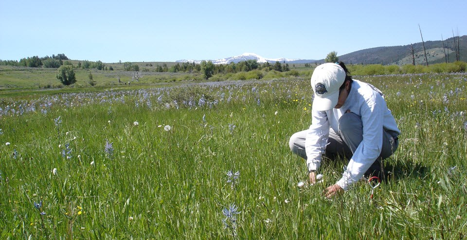 Biologist examining plants in a meadow