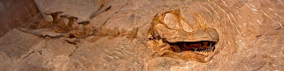 Photo of dinosaur skeleton embedded in stone