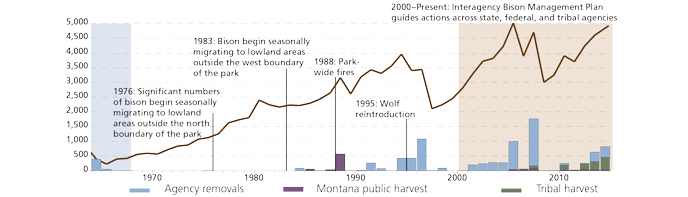A timeline showing the bison population per year along with notable events