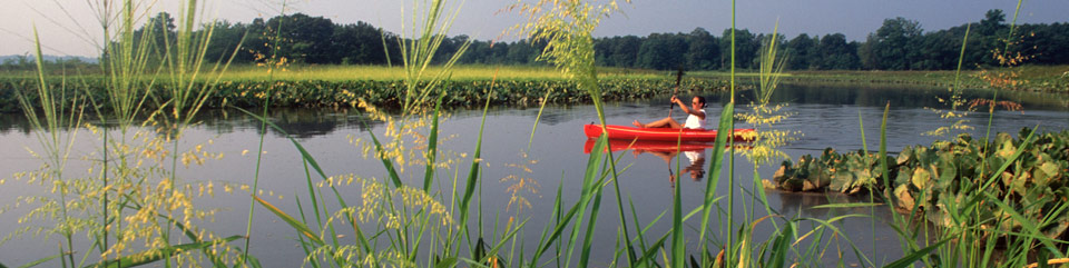 A kayaker paddles on the Patuxent River at the Jug Bay Natural Area. Photo by Middleton Evans.