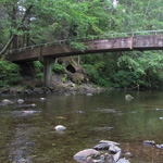 A wooden foot-bridge spans across a forest stream.