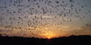 Evening bat flight at Carlsbad Caverns National Park.