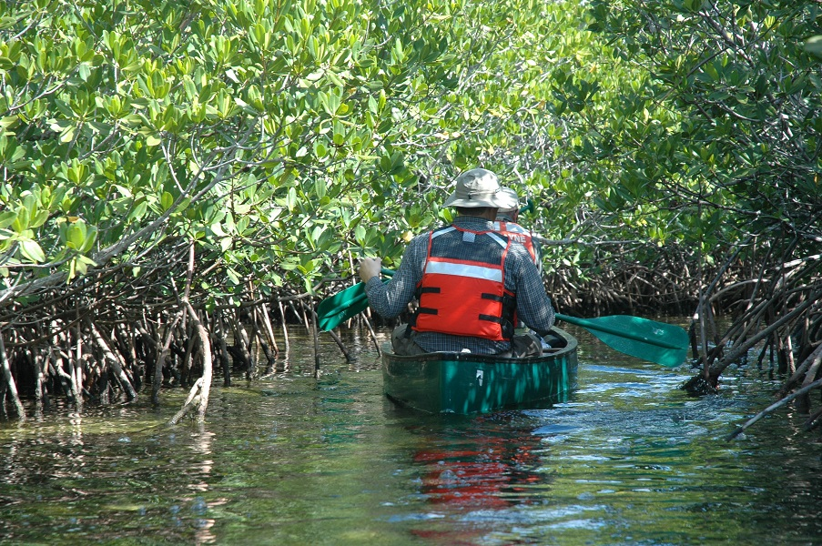Canoe in mangroves