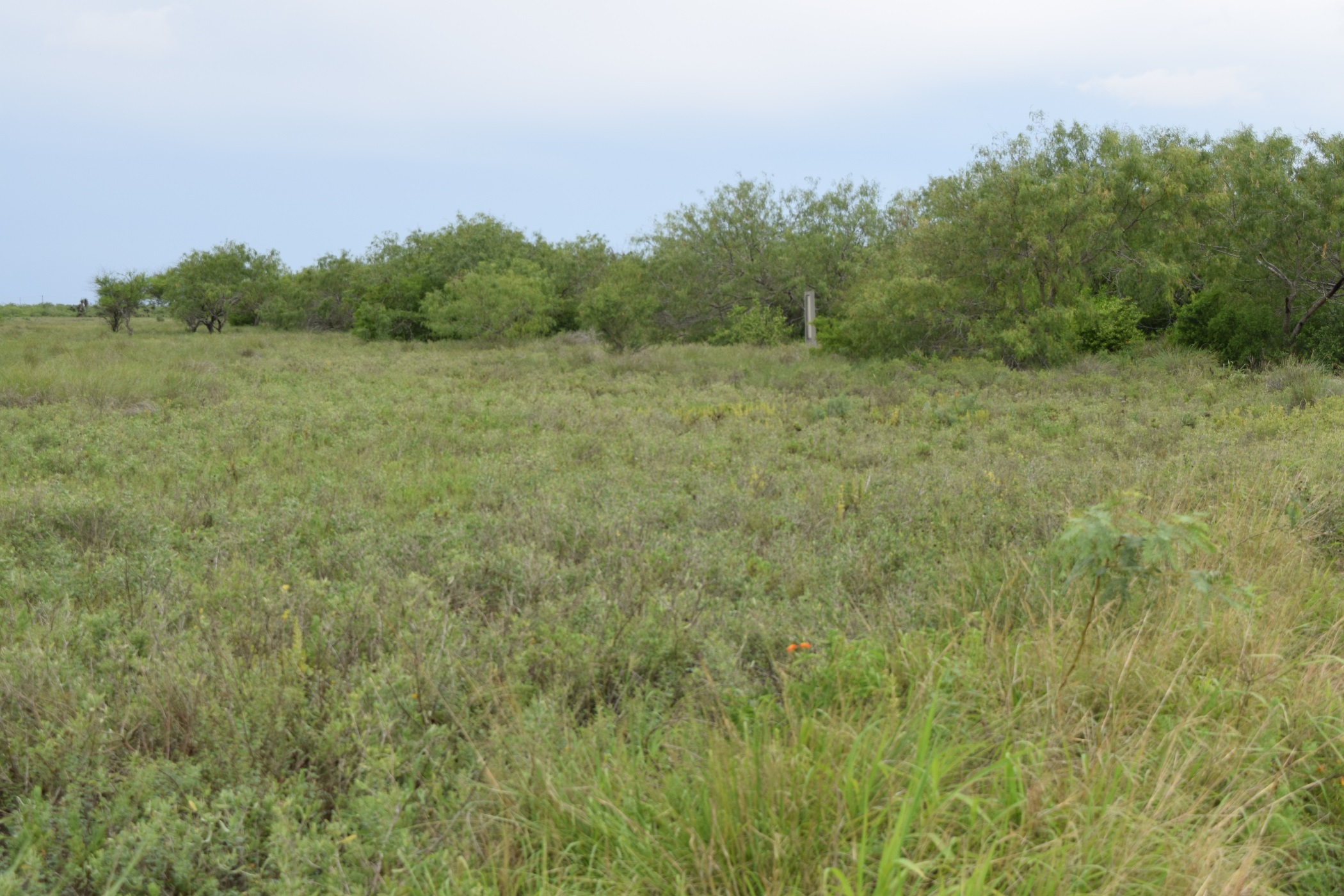 Difference between taller dense brush in chaparral compared to low laying grasses found in coastal prairies