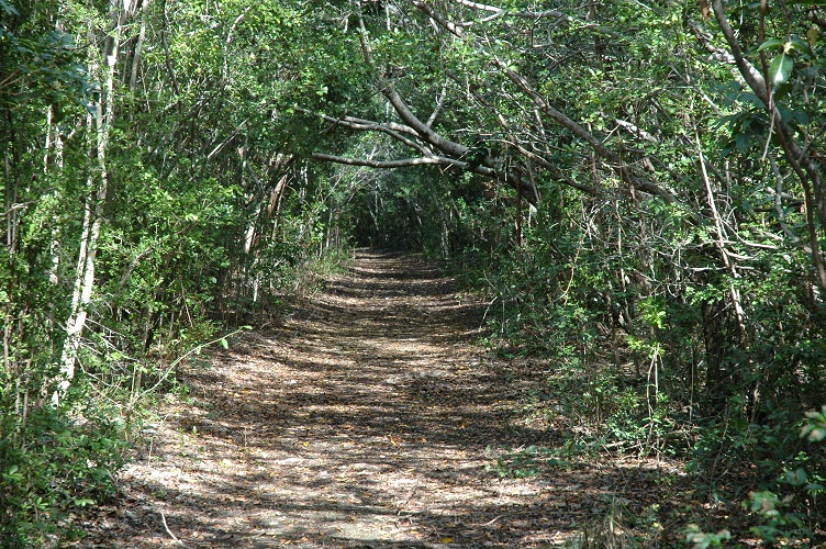 Elliott Key trail