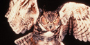 Great Horned Owls can be heard most often in January and February