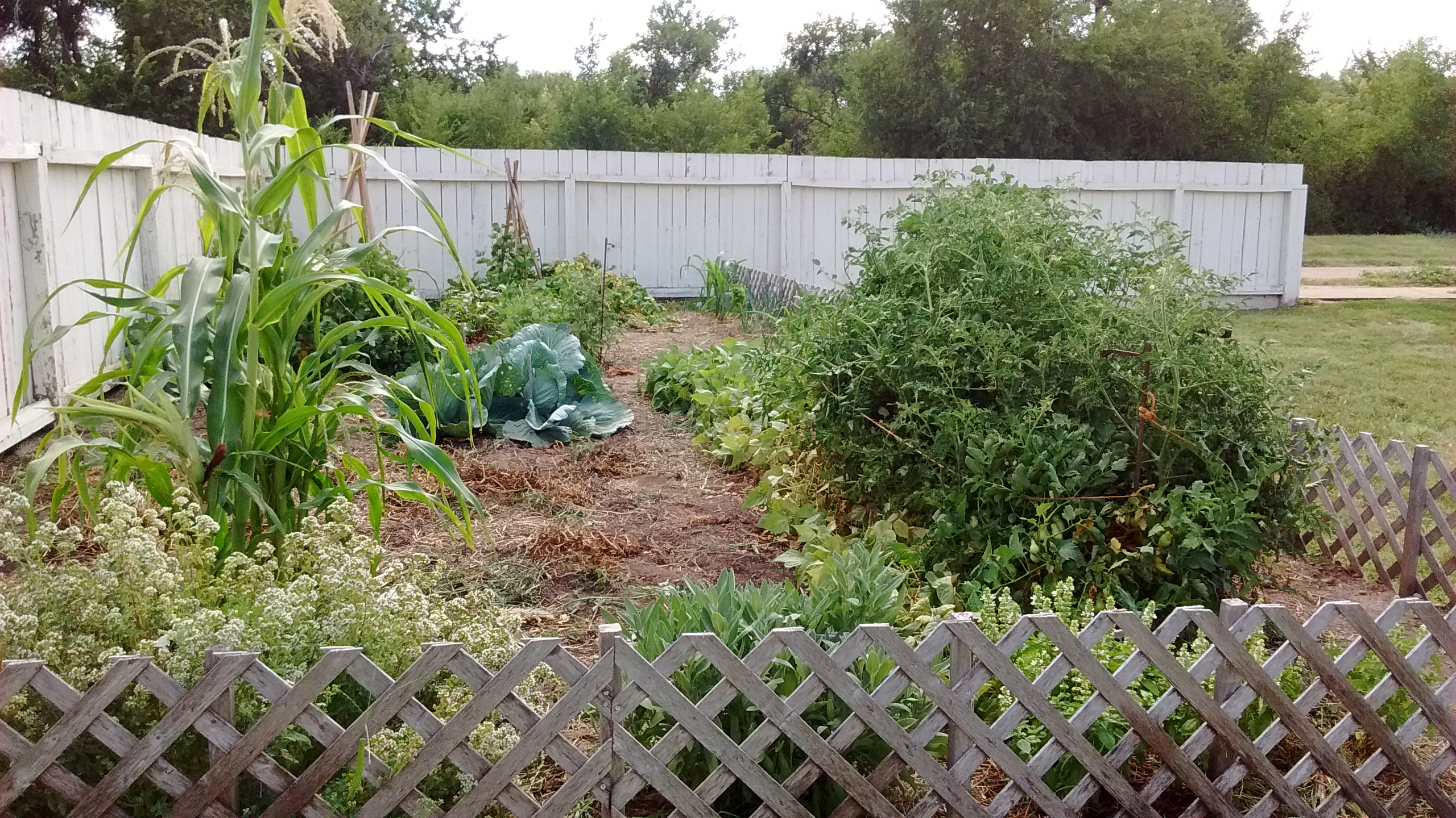 Fort vegetable garden in early July.