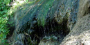 Close up of spring water dripping over algae covered rock formation.
