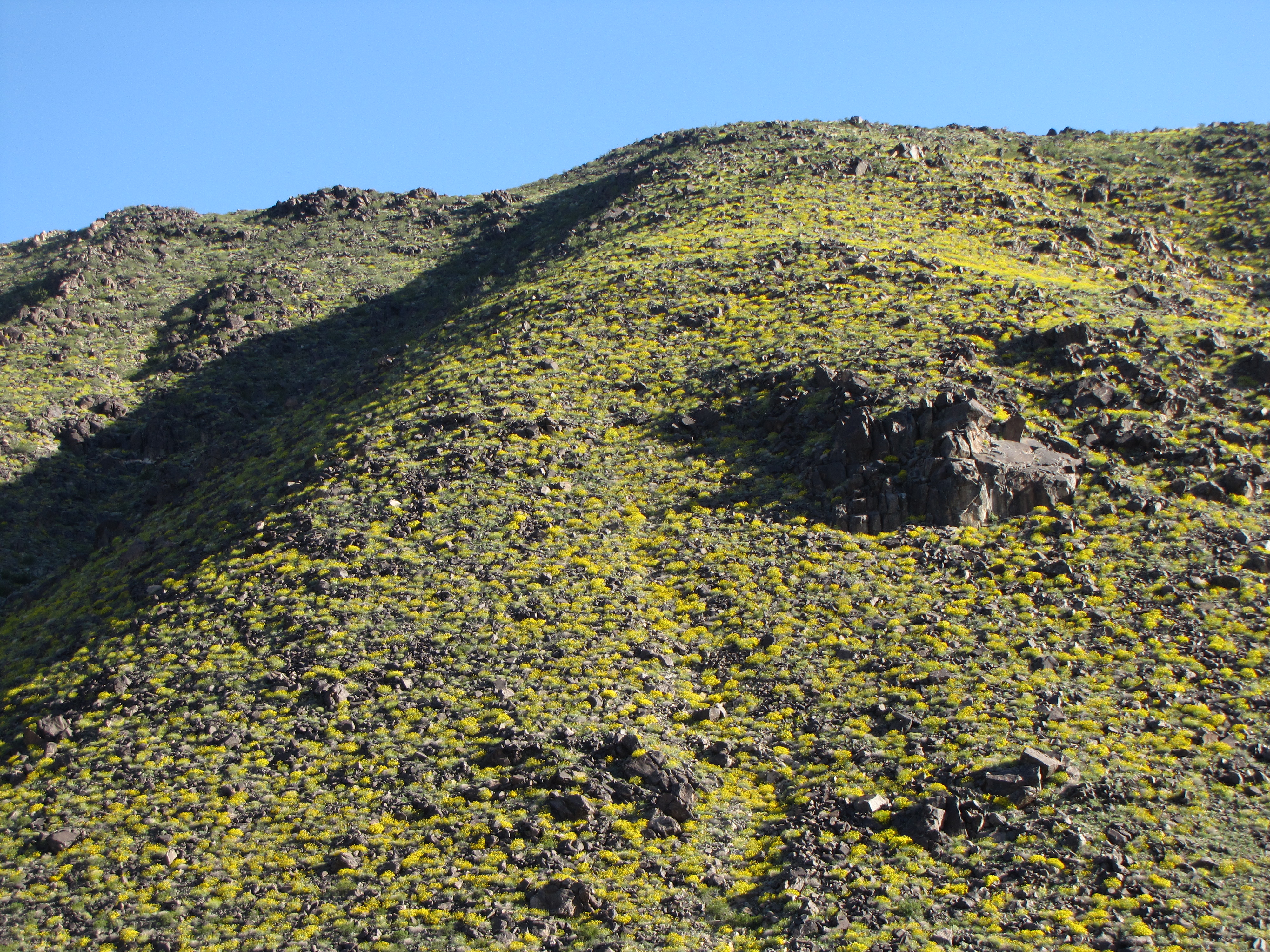 Color photo of a hillside covered in pops of yellow flowers. NPS / Neil Frakes