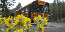 School bus and arrowleaf balsamroot