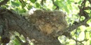 Hummingbird nest at MOWE