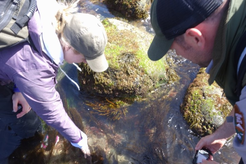 Child viewing tidepools with NPS ranger