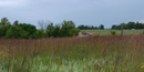 Tallgrass prairie landscape with Big Bluestem Grass