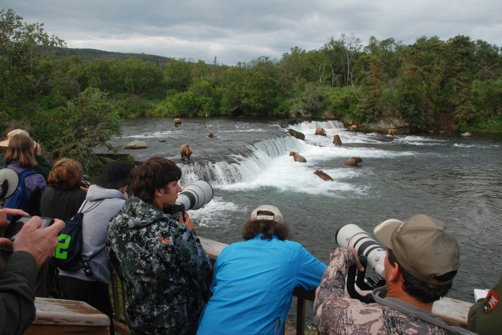 People photograph bears from the falls platform