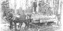 Blackand white old photo of three men standing on logs loaded on a wagon with horses attached