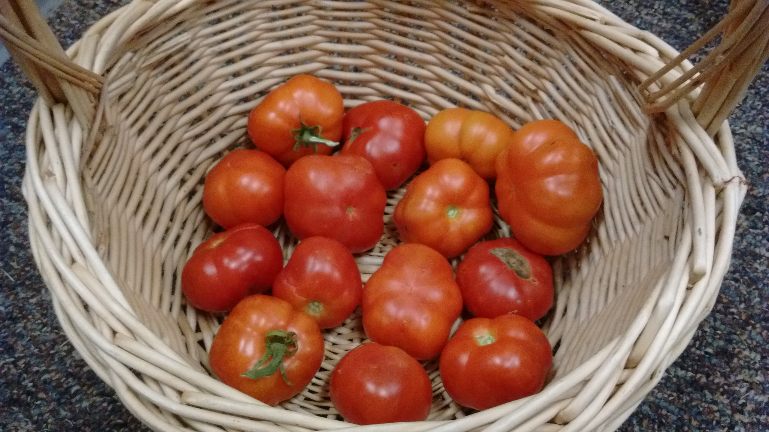 Bowl of tomatoes.