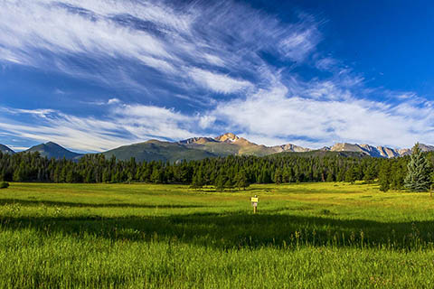 A green mountain meadow is backdropped by rocky peaks