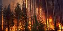 Fire in Yellowstone Pineland in 1988