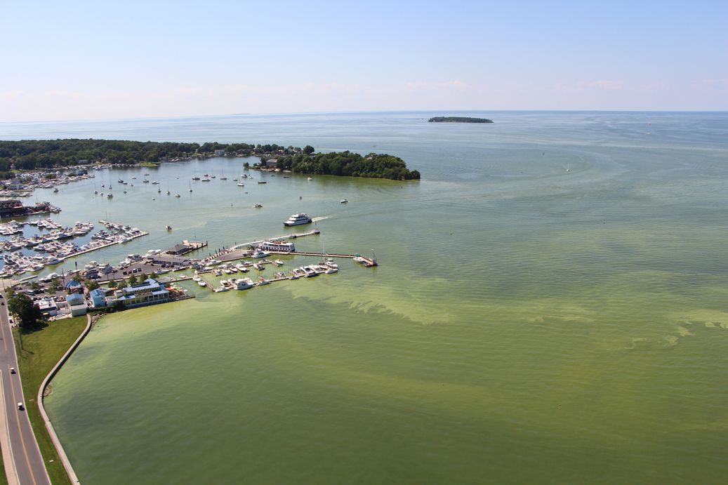 Put-in-Bay Harbor with green Harmful algal bloom