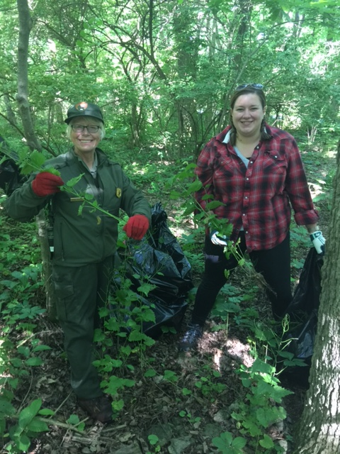 National Park Rangers Kathie Holbrook and Alyssa Kudray tackle the invasive plants.