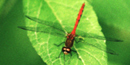 Dragonfly image by NPS volunteer John Catalano.
