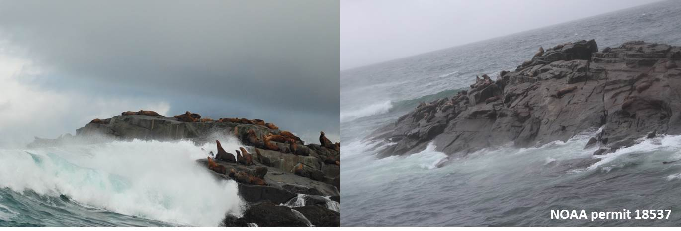 Waves crash on rocks with sea lions