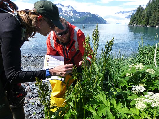 Kenai Fjords Resource Management Team looks for invasive plants in Aialik Bay.