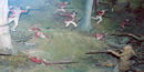 battle diorama showing loyalists in red coats and patriots in frontier wear firing at each other