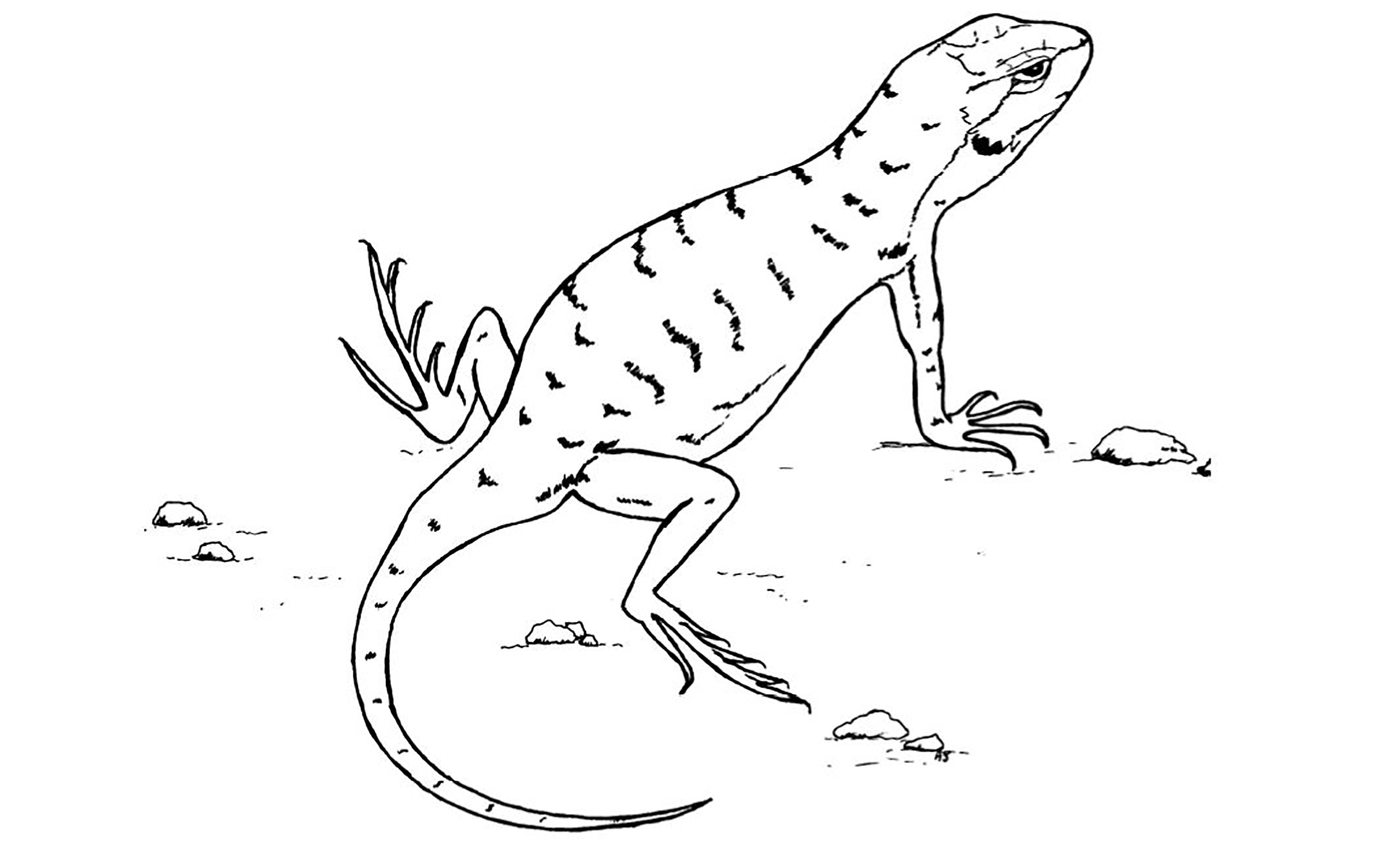 a line drawing of a lizard