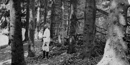 A man dressed all in white is contrasted by the dark and knobbly bark of spruce trees. Published in American Forests magazine in 1910.