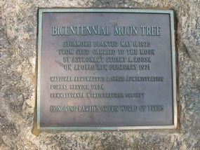 Moon Tree Plaque