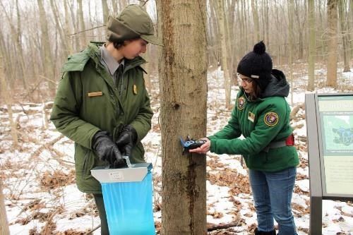 Volunteers collecting maple sugar data